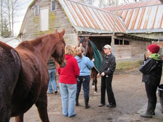 Wings Equine & Canine Massage